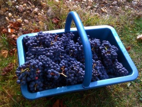 france-grapes500.jpg